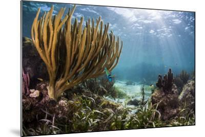 Sunlight Illuminates Soft and Hard Corals and Blue and Clear Waters, Cuba-James White-Mounted Photographic Print