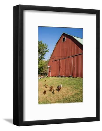 Washington State, Palouse, Whitman County. Pioneer Stock Farm, Chickens and Peacock in Barn Window-Alison Jones-Framed Photographic Print