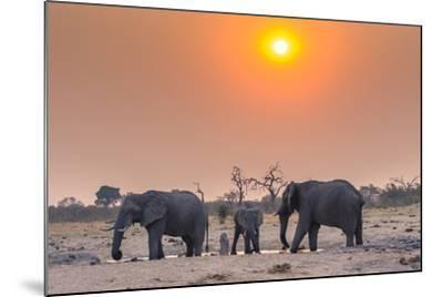 Botswana. Chobe National Park. Savuti. Harvey's Pan. Elephants Drinking at a Water Hole at Sunset-Inger Hogstrom-Mounted Photographic Print