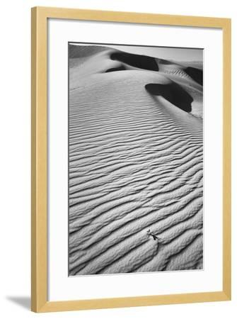 California, Mojave Trails National Monument-Judith Zimmerman-Framed Photographic Print