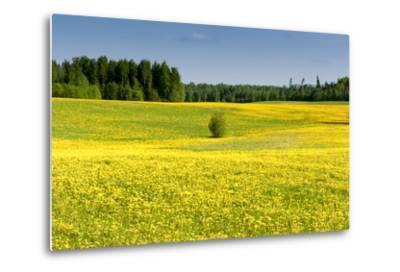 Fields at Varska, Estonia, Baltic States-Nico Tondini-Metal Print