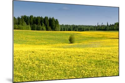 Fields at Varska, Estonia, Baltic States-Nico Tondini-Mounted Photographic Print