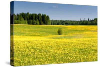 Fields at Varska, Estonia, Baltic States-Nico Tondini-Stretched Canvas Print