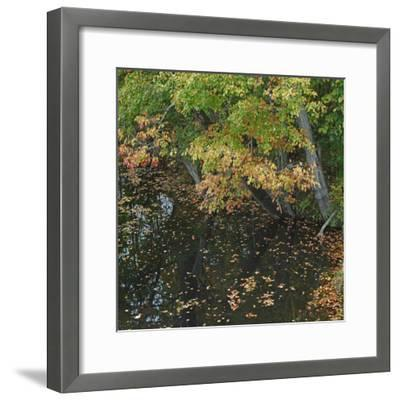 Fallen Leaves on Little Androscoggin River, New Hampshire, Usa-Tim Fitzharris-Framed Photographic Print