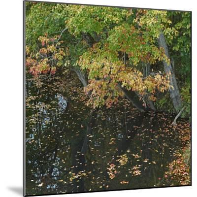 Fallen Leaves on Little Androscoggin River, New Hampshire, Usa-Tim Fitzharris-Mounted Photographic Print