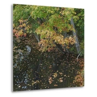 Fallen Leaves on Little Androscoggin River, New Hampshire, Usa-Tim Fitzharris-Metal Print
