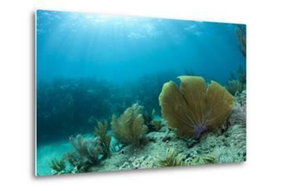 A Purple Sea Fan Sways in the Clear Blue Water of Looe Key Reef Off of Ramrod Key-James White-Metal Print
