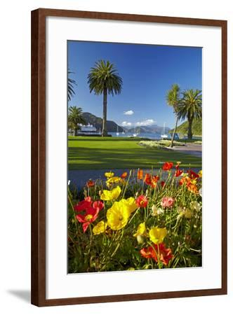Flowers and Palm Trees, Foreshore Reserve, Picton, Marlborough Sounds, South Island, New Zealand-David Wall-Framed Photographic Print