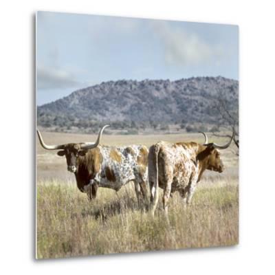 Longhorn Cattle, Texas, Usa-Tim Fitzharris-Metal Print