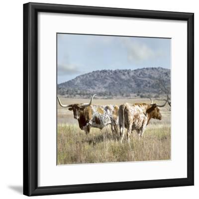 Longhorn Cattle, Texas, Usa-Tim Fitzharris-Framed Photographic Print