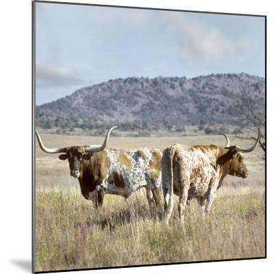 Longhorn Cattle, Texas, Usa-Tim Fitzharris-Mounted Photographic Print