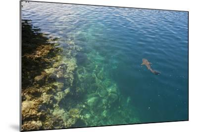 Black Tipped Sharks in the Crystal Clear Waters of the Marovo Lagoon, Solomon Islands, Pacific-Michael Runkel-Mounted Photographic Print