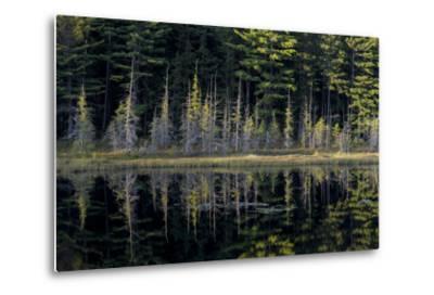 Maine, Baxter State Park, Reflections on Abol Pond-Judith Zimmerman-Metal Print