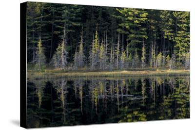 Maine, Baxter State Park, Reflections on Abol Pond-Judith Zimmerman-Stretched Canvas Print