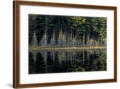 Maine, Baxter State Park, Reflections on Abol Pond-Judith Zimmerman-Framed Photographic Print
