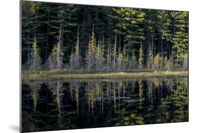 Maine, Baxter State Park, Reflections on Abol Pond-Judith Zimmerman-Mounted Photographic Print