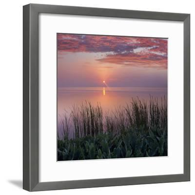 Sunrise over Indian River Marsh Near Titusville, Florida, Usa-Tim Fitzharris-Framed Photographic Print