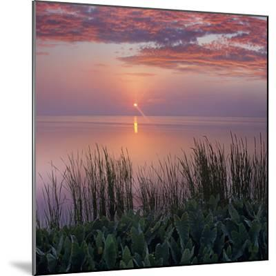 Sunrise over Indian River Marsh Near Titusville, Florida, Usa-Tim Fitzharris-Mounted Photographic Print