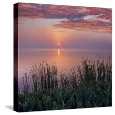 Sunrise over Indian River Marsh Near Titusville, Florida, Usa-Tim Fitzharris-Stretched Canvas Print