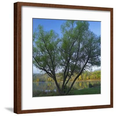 Willow Tree at Lackawanna Lake in Autumn, Lackawanna State Park, Pennsylvania, Usa-Tim Fitzharris-Framed Photographic Print