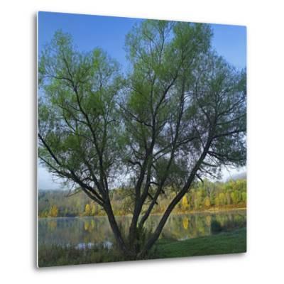 Willow Tree at Lackawanna Lake in Autumn, Lackawanna State Park, Pennsylvania, Usa-Tim Fitzharris-Metal Print