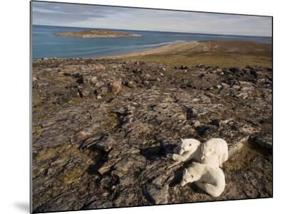 Polar Bear Resting with Cubs in Hills Above,Canada-Paul Souders-Mounted Photographic Print