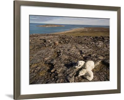 Polar Bear Resting with Cubs in Hills Above,Canada-Paul Souders-Framed Photographic Print