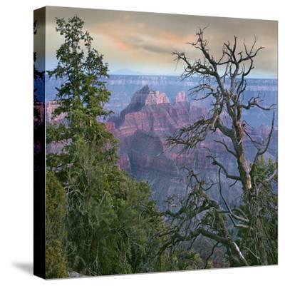 Wotans Throne, North Rim, Grand Canyon National Park, Arizona, Usa-Tim Fitzharris-Stretched Canvas Print