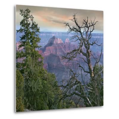 Wotans Throne, North Rim, Grand Canyon National Park, Arizona, Usa-Tim Fitzharris-Metal Print