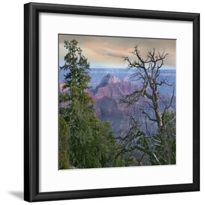 Wotans Throne, North Rim, Grand Canyon National Park, Arizona, Usa-Tim Fitzharris-Framed Photographic Print