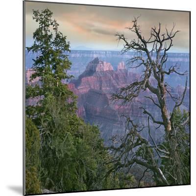 Wotans Throne, North Rim, Grand Canyon National Park, Arizona, Usa-Tim Fitzharris-Mounted Photographic Print