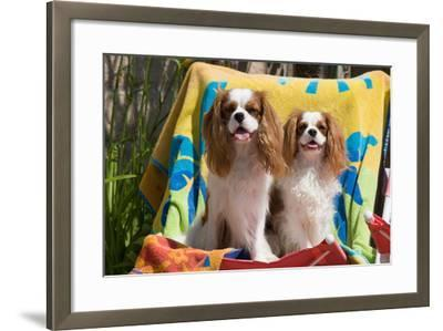 Cavaliers at a Pool Party-Zandria Muench Beraldo-Framed Photographic Print