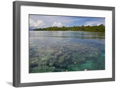 Giant Clams in the Clear Waters of the Marovo Lagoon, Solomon Islands, Pacific-Michael Runkel-Framed Photographic Print