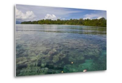 Giant Clams in the Clear Waters of the Marovo Lagoon, Solomon Islands, Pacific-Michael Runkel-Metal Print