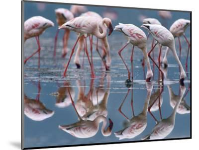 Lesser Flamingos and their Reflections, Kenya, Africa-Tim Fitzharris-Mounted Photographic Print