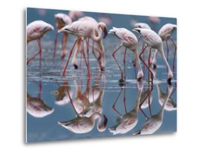 Lesser Flamingos and their Reflections, Kenya, Africa-Tim Fitzharris-Metal Print
