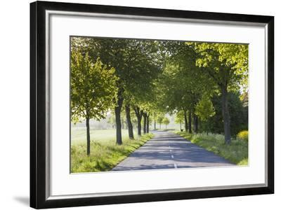Denmark, Mon, Magleby, Country Road-Walter Bibikow-Framed Photographic Print