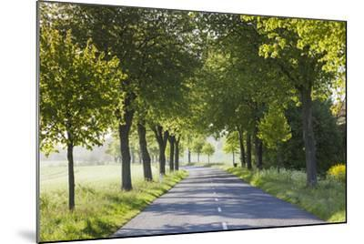 Denmark, Mon, Magleby, Country Road-Walter Bibikow-Mounted Photographic Print