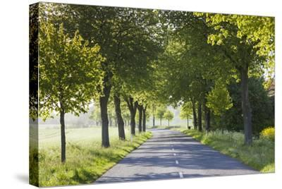 Denmark, Mon, Magleby, Country Road-Walter Bibikow-Stretched Canvas Print