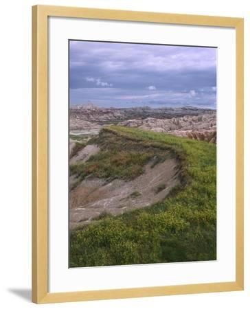 Wildflower Cling to a Ridge in Badlands National Park, South Dakota-Tim Fitzharris-Framed Photographic Print