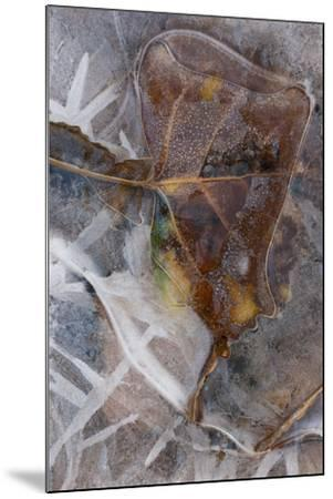 Utah. Abstract Design of Frozen Ice Patterns and Aspen Leaf in Stream, Hunter Canyon, Near Moab-Judith Zimmerman-Mounted Photographic Print