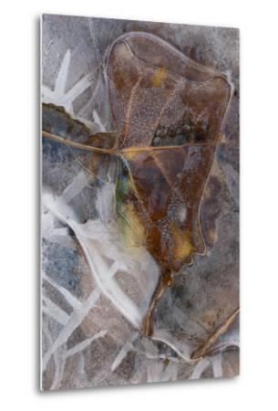 Utah. Abstract Design of Frozen Ice Patterns and Aspen Leaf in Stream, Hunter Canyon, Near Moab-Judith Zimmerman-Metal Print
