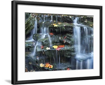 Small Waterfall on Kitchen Creek, Ricketts Glen State Park, Pennsylvania, Usa-Tim Fitzharris-Framed Photographic Print