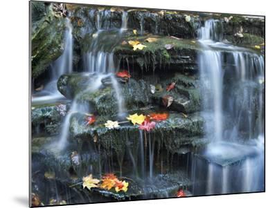 Small Waterfall on Kitchen Creek, Ricketts Glen State Park, Pennsylvania, Usa-Tim Fitzharris-Mounted Photographic Print