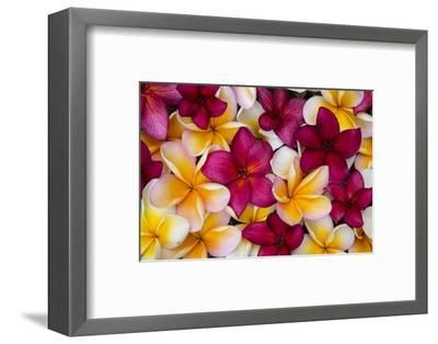Hawaii, Maui, Plumeria in Mass Display-Terry Eggers-Framed Photographic Print