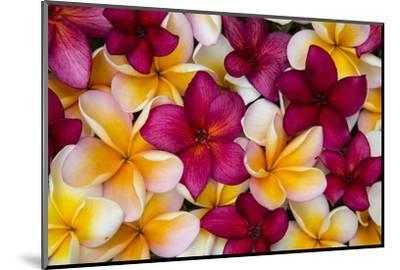 Hawaii, Maui, Plumeria in Mass Display-Terry Eggers-Mounted Photographic Print