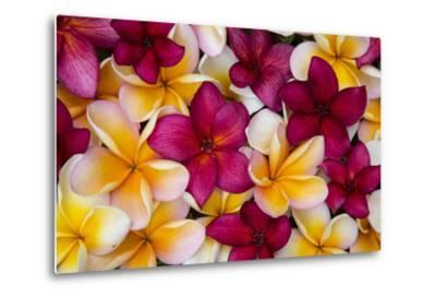 Hawaii, Maui, Plumeria in Mass Display-Terry Eggers-Metal Print