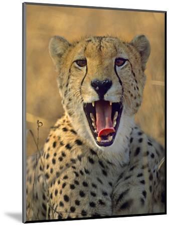 Cheetah, Kenya, Africa-Tim Fitzharris-Mounted Photographic Print