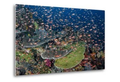Indonesia, Alor Island. Coral Reef Scenic-Jaynes Gallery-Metal Print