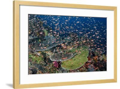 Indonesia, Alor Island. Coral Reef Scenic-Jaynes Gallery-Framed Photographic Print